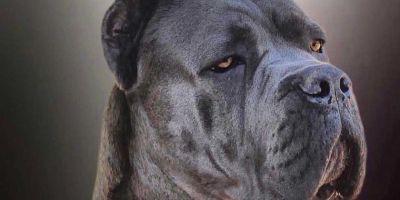 La demanda de perros guardianes crece un 60%