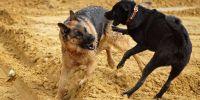 El 60% de las consultas veterinarias están relacionadas con la agresividad canina
