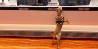 Una Unidad Canina de élite en la sede deNaciones Unidas
