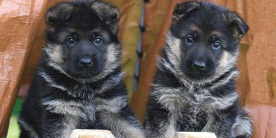 Europa da un paso más contra la cría ilegal, pero tímido