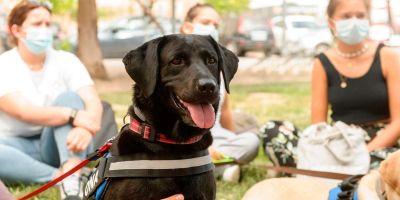 Dos perras ayudan a universitarios a iral día en sus estudios