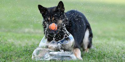 ¿Tienes un perro gruñón? Es más inteligente que los sociables