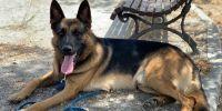 Stan Lee hace realidadel sueño de su adoptante: ser guía canino