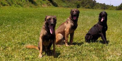 Los ERTE llegan a los perros policía