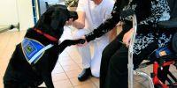 La falta de solvencia de la empresa canina adjudicataria deja a nueve residencias sin asistencia con perros