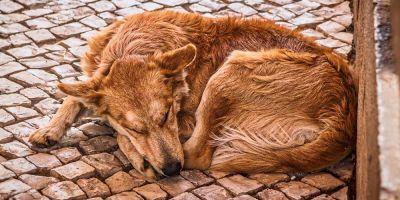 ¿Es posible ejercer la acusación particular en maltrato animal?