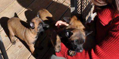 Los criadores de perros deberán aprender técnicas de psicología antes de vender un animal