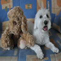 Editorial: Los negocios caninos tienen que ser rentables