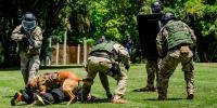 Los perros que se juegan la vida en las  fuerzas especiales