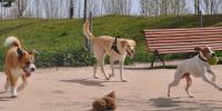 Perros 10